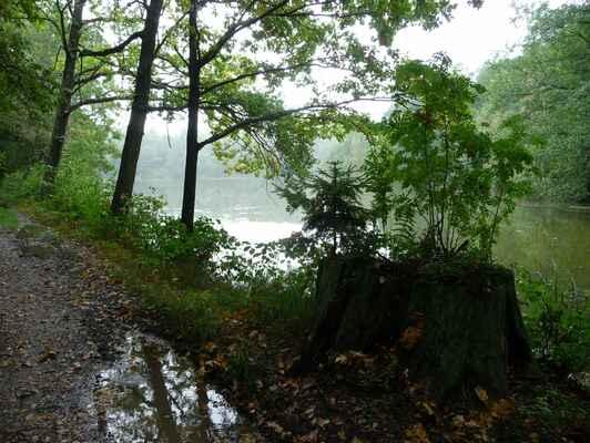 Trávniční rybník