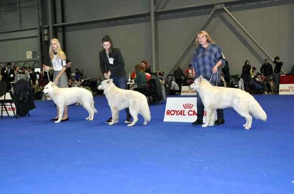 Argo Dark Albedi Blondi, Big Dreamer Fenix White Essence a Janek z Veselé rodiny - Male Junior class