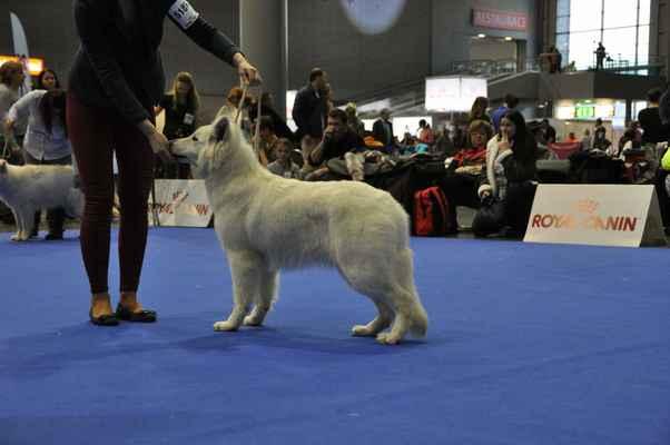 Chris Bílá Merci - Female Puppy class