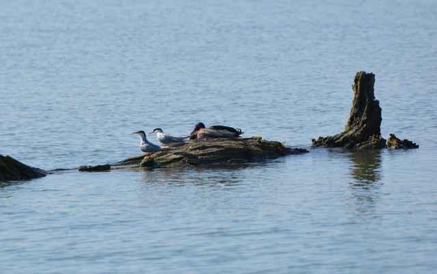 dvojica rybárov oddychuje po love