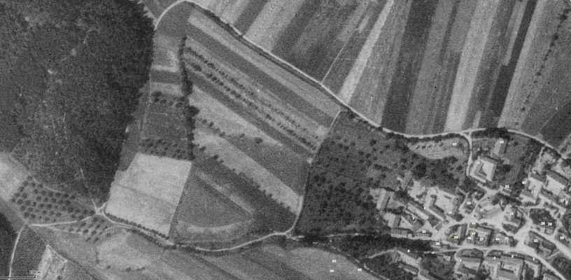 1955 - 1955