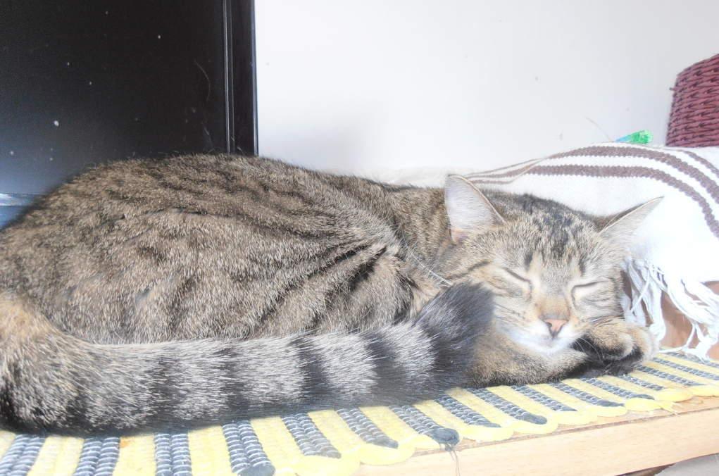 lil kočičky